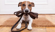 Bring Your Dog to Work: A Weekend Roundup